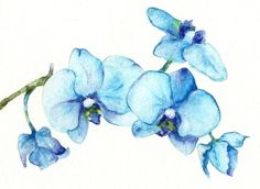 Blue Orchids - Watercolor by Goosi - Print available $ 15.00