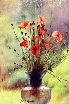 A bouquet of poppies - null