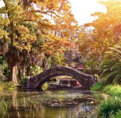1) Bayou Bridges, City Park
