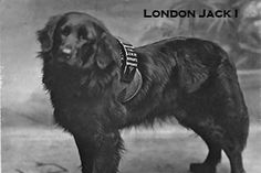 Dogs raised money for orphanges and hospitals Historical Images, Hospitals, Newfoundland, How To Raise Money, Charity, Literature, America, History, Dogs