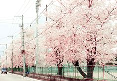 ㅇㅅㅇ Pink -by Kymberly Fergusson #Japan