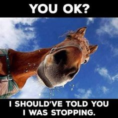 Sunday morning giggle  #lolsurprise #giggles #laughteristhebestmedicine #horse #funnymemes