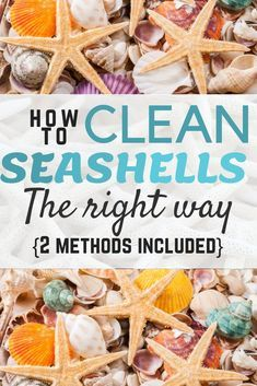 For keeping your toilet fresh and germ-free at home try this simple homemade toilet cleaner tablet recipe. Why spend on store bought toilet cleaners that Deep Cleaning Tips, House Cleaning Tips, Cleaning Solutions, Spring Cleaning, Cleaning Hacks, Cleaning Products, Seashell Crafts, Beach Crafts, Diy Crafts