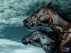 Swedish Horse Racing ad