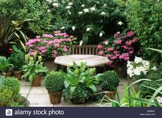 Download this stock image: Patio, table, seating, hydrangea, buddleia, lillies, garden furniture, pink, white flowers, paving, terrace, box balls, pots, - A60BXY from Alamy's library of millions of high resolution stock photos, illustrations and vectors.