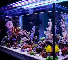 Saltwater Aquarium - Find incredible deals on Saltwater Aquarium and Saltwater Aquarium accessories. Let us show you how to save money on Saltwater Aquarium NOW! Wall Aquarium, Coral Aquarium, Saltwater Aquarium Fish, Live Aquarium, Glass Aquarium, Aquarium Design, Saltwater Tank, Marine Aquarium, Aquarium Ideas