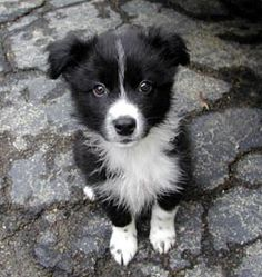 Wonder if my Flint looked like this when he was a pup?