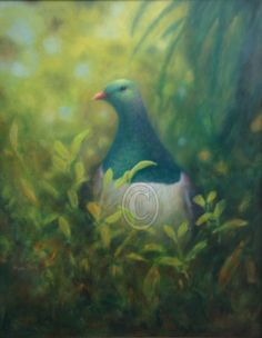 New Zealand Pigeon painted in oil on panel. Size is 500mm x 400mm.