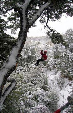 Canopy en Parque nacional Los Alerces.