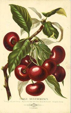 Cherry plate by Joseph Prestele