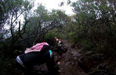 Mt. Warning, NSW Summit Trek