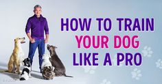 How toTrain Your Dog Like aPro