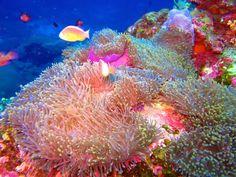 Scuba diving at the Similan Islands, Thailand