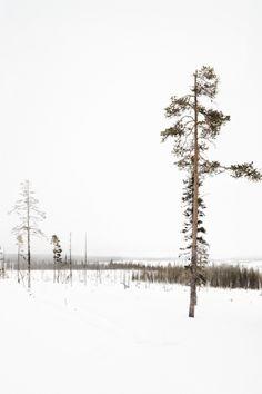 Snow Landscapes - Works - Jan Kempenaers