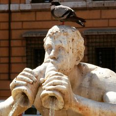 Just a quick stop for the bird, Rome