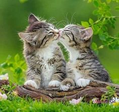 Tiger gets all my kisses!!!
