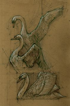 andrewprasetya: Swan Drawings, mostly from memory.