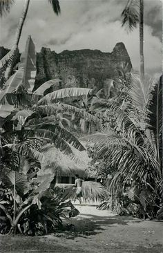1961 Moorea Tahiti Studio Mackenzie RPPC French Polynesia Oceania | eBay