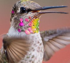 Photographer Captures The Multi-Colored Magic Of Hummingbirds   HuffPost
