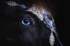 "2,391 Likes, 52 Comments - Elina Lindgren (@ellinphoto) on Instagram: ""Icelandic gelding Glaesir with matching jewelry ❄️ - Jewelry from very talented @nordicespanola …"""