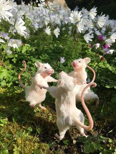 Taxidermy mice dancing in the daisies Cute Little Animals, Cute Funny Animals, Le Vent Se Leve, Cute Rats, Aesthetic Art, Animal Memes, Art Inspo, Animals And Pets, Cute Babies