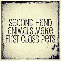 Adopt a first class pet from your local shelter Animal Rescue Quotes, Animal Quotes, Animal Adoption, I Love Dogs, Puppy Love, Pet Sitter, Class Pet, First Class, Thats The Way