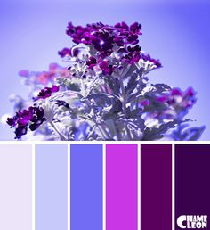 Color Palette, cardinal, lilac, pastel shades.