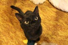 Bruce the cat  brucethecat.co.nz Facebook.com/brucethekitten #brucethecat #brucethecatnz #blackcat #rescuecat