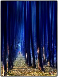 blue trees See Through Prom Dress, Magical Tree, Crystal Dress, Vintage Prom, Color Theory, Beautiful World, Wonders Of The World, Art Photography, Blue Trees