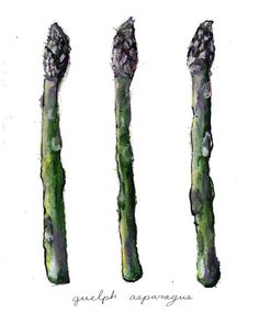 Asparagus Print Asparagus Art Food Illustration by Interpersonal