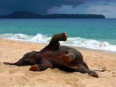 I'm glad she's having a good time! Phuket Elephant on the Beach by John Lindie, via Flickr