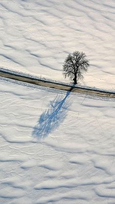 All Alone tomorrow I Cool, Cool Art, Let It Snow, Let It Be, Scenery Pictures, All Alone, One Tree, Winter Wonderland, Lonely