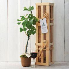 Mini Vineyard  by The Gluttonous Gardener  €53.04     www.notonthehighstreet.com