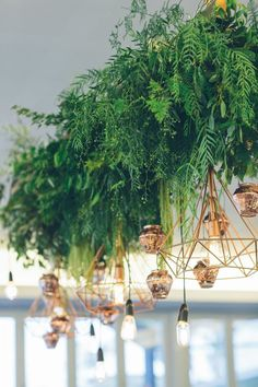 Hanging foliage and geometric lighting | Botanica Naturalis