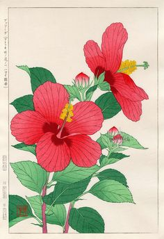 Hibiscus by Shodo Kawarazaki