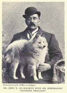 1902 White #pomeranian & Man photo 1902