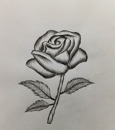 rose easy drawing draw drawings simple pencil roses flowers beginners flower clipartfox dragon drawn steemit