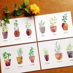Set of 4 Watercolor Fresh Herbs Cards Potted Kitchen Herbs Easy Watercolor, Watercolor Sketch, Watercolor Cards, Watercolor Illustration, Watercolor Flowers, Watercolor Paintings, Watercolors, Illustration Tumblr, Illustration Blume