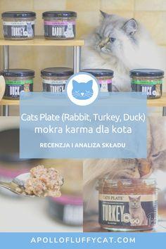 Tym razem, w ramach mojej serii recenzji polskich karm dla kotów, na talerzu Apolla pojawiły się trzy najnowsze smaki wekowanej karmy Cats Plate. Każdy słoiczek karmy skrywa w sobie wysokiej jakości mięso królika, indyka lub kaczki w towarzystwie naturalnych źródeł pierwiastków. Jak wypada ta karma w mojej dokładnej analizie składu i teście smakowitości Apolla? Fluffy Cat, Apollo, Karma, Rabbit, Turkey, Plates, Eat, Bunny, Licence Plates