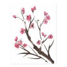 Plum Blossom Sprig Postcard