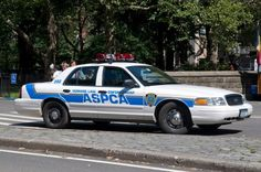 Reporting Animal Cruelty: 10 Things You Need To Know Old Police Cars, Police Truck, New York Police, Cute Dog Photos, 2019 Ford, Emergency Vehicles, Disney Family, Cops, Cute Dogs