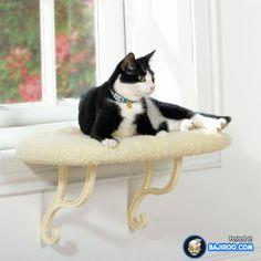 Cat enclosure cats catios cat fencing catio catstairs outdoor cat
