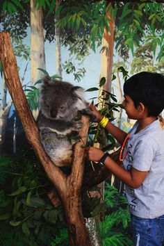 Koala close encounter, Maru Koala Park, Philip Island - thespiceadventuress.com