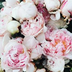 Springtime in Paris Pink Peonies