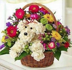 Just in time for Mother's Day! Learn to make your own adorable Puppy Bouquets. This will make an amazing gift!