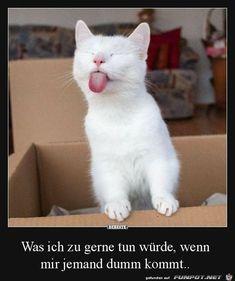 lustiges Bild 'Das sieht lustig aus.jpg'- Eine von 21209 Dateien in der Kategorie 'witzige Bilder' auf FUNPOT.
