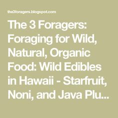 The 3 Foragers: Foraging for Wild, Natural, Organic Food: Wild Edibles in Hawaii - Starfruit, Noni, and Java Plum