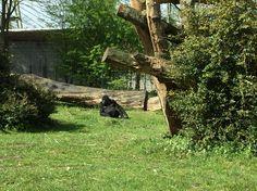 Gorilla burgers zoo