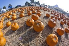 Look at all the pumpkins ♡