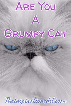 Are You A Grumpy Cat?
